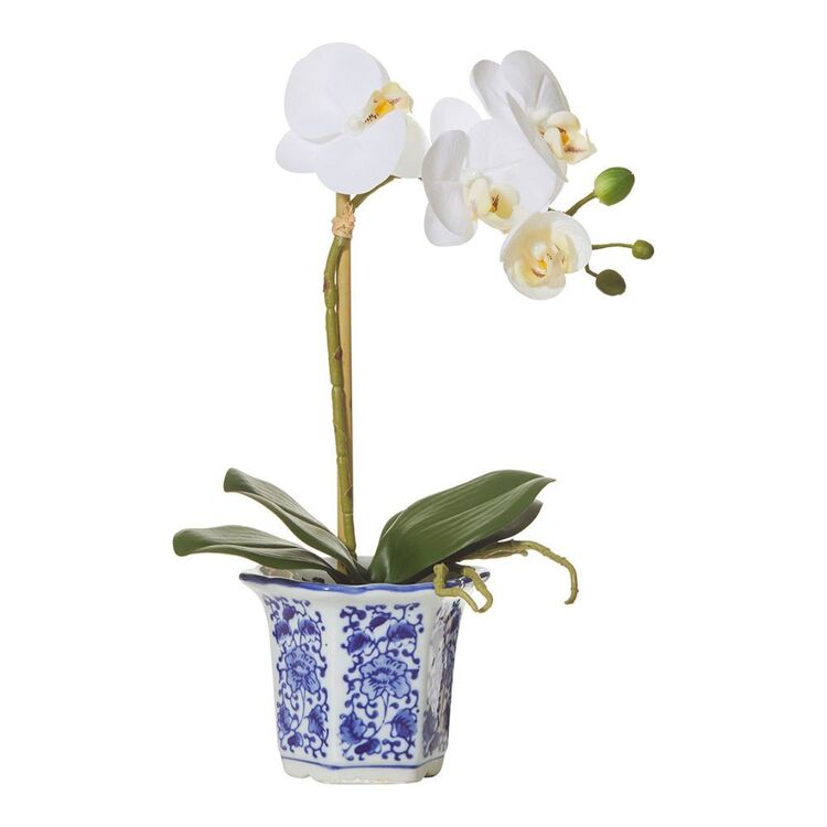 ROGUE BUTTERFLY ORCHID CHINOISERIE POT