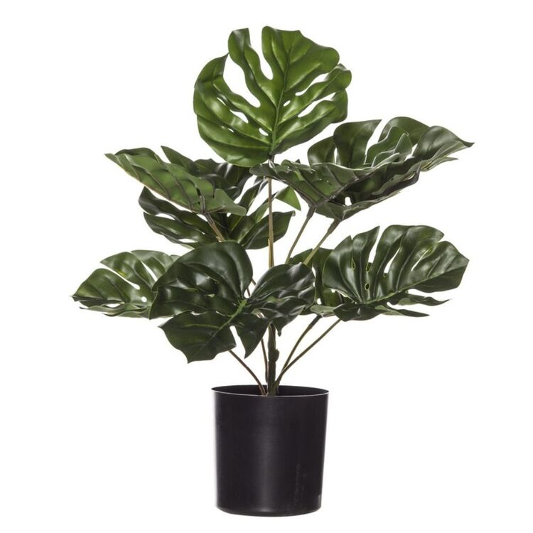 ROGUE Monsteria Plant-Garden Pot