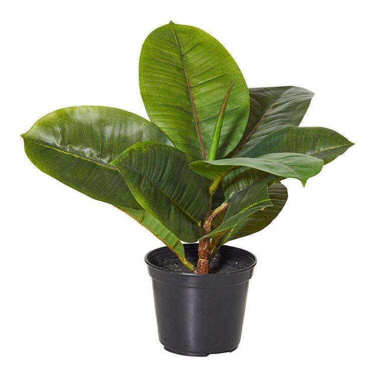 ROGUE Rubber Plant-Garden Pot