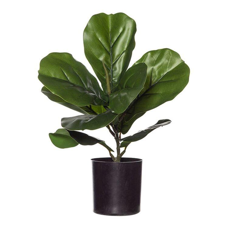 ROGUE Fiddle Plant-Garden Pot