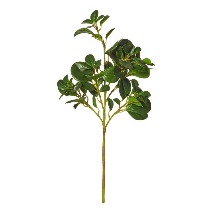 ROGUE PEPPEROMIA STEM LS